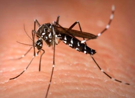 basmi nyamuk dalam apartemen